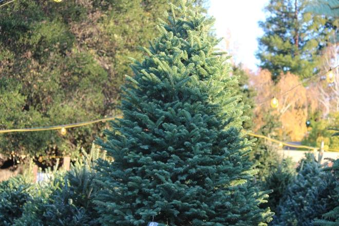 tree lot 2